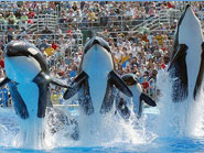 California Seaworld